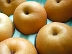 【梨の保存方法】冷蔵も冷凍もできる!それぞれのやり方と選び方を紹介
