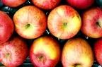 りんごを美味しく保存する方法【常温・冷蔵・冷凍】離乳食のすりおろしも