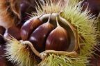 栗に含まれる栄養素と効能は?カロリーやおすすめレシピも紹介!