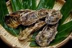 牡蠣に含まれる栄養素と効能は?保存方法や上手な食べ方まで徹底解説!
