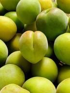 梅はいつが収穫時期?梅酒・梅干し・用途別に収穫時期を紹介!