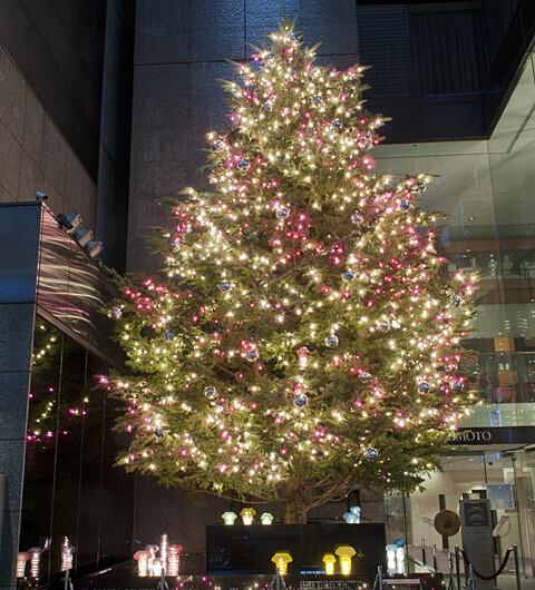 ミキモト ジャンボクリスマスツリー、今年も登場