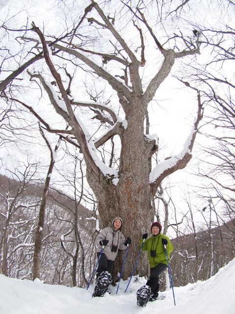 軽井沢・ピッキオ「雪の森ハイキング」