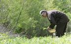星のや・軽井沢、春の芽吹きが香る「嘉助の特別昼食膳」
