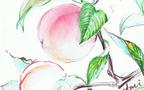 初夏限定の開運パワーフルーツ 桃