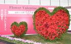 キングカズも推奨! バレンタインは男性から女性に花束を! フラワーバレンタイン イベント開催