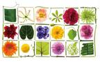 花でいっぱいのイベントが開催! 花のある暮らしを楽しむヒントが得られるかも
