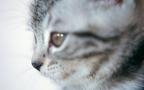 愛猫の死に後悔ばかり… ペットロスに耐えられないときの対処法【心屋仁之助 塾】