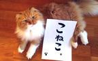 猫たちの名演技を観よ! ロシア発、猫映画の決定版『こねこ』【映画ライター渡まち子の「猫目線」映画レビュー3】