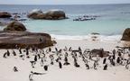 少ない日数でも大丈夫、これからが真夏の南アフリカへ充実のバカンスはいかが?