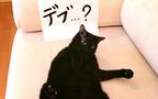 愛猫の体重管理にはご注意を! 『N.Y.式ハッピー・セラピー』【映画ライター渡まち子の「猫目線」映画レビュー7】