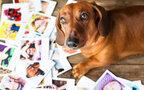 71歳の人と15歳の犬がサーフィン。ペットへの愛であふれた動画に心温まる