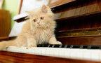 寂しい猫の歌【自由が丘恋物語 〜winter version〜 第29話】