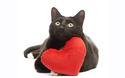猫と人間の恋愛は可能?! 『陽だまりの彼女』【映画ライター渡まち子の「猫目線」映画レビュー10】