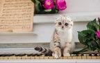 猫が見守る天才ピアニスト『シャイン』【映画ライター渡まち子の「猫目線」映画レビュー11】