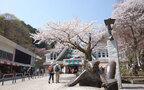 すべて初心者向け。山桜が眺められる絶景ハイキング3選