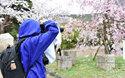 カメラがもっと楽しくなる! 桜の京都を巡る「ニッコールレンズフォトツアー」に行ってきました