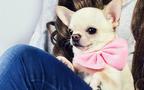 ワンちゃん好き注目! エレ女&エレdogが集まる『25ans』のスペシャルな愛犬家イベント。 トークショーやチャリティも