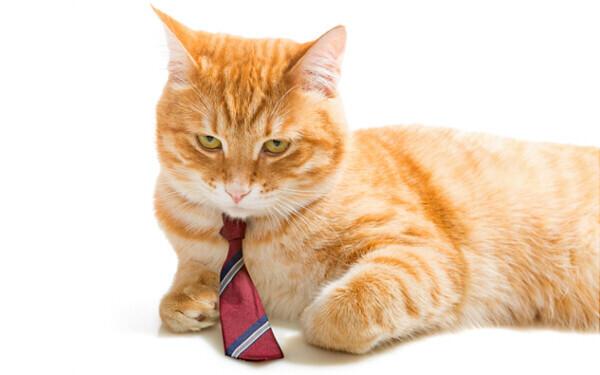 """勝手気ままに見える猫の""""美徳""""とは。『すーちゃん まいちゃん さわ子さん』【映画ライター渡まち子の「猫目線」映画レビュー13】"""