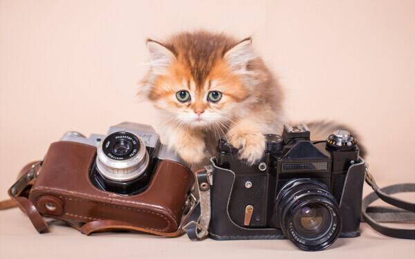 全編「ネコ語」の人形アニメがもん絶級にカワイイ! 『こま撮りえいが こまねこ』【映画ライター渡まち子の「猫目線」映画レビュー15】