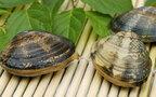 ポイントさえつかめば簡単、ツルっとあさりの貝柱を取る方法