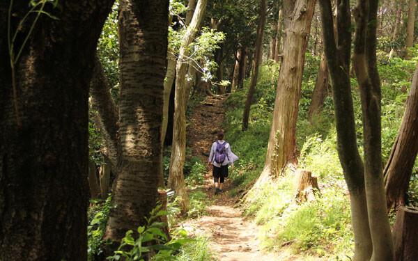 スニーカーで行ける。鎌倉にある絶景ハイキングコースが素敵すぎる