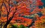 高尾山の絶景と楽しむ!グルメや天然温泉で日帰りの旅