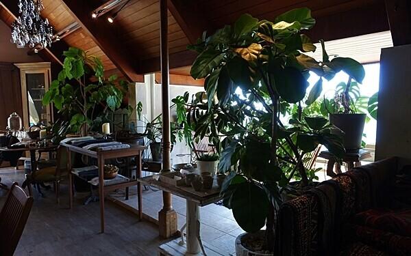 山中にたたずむエキゾチックなカフェ #葉山 #c:hord hayama antiques & bookcafe #おしゃれカフェ Vol.10