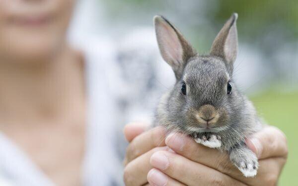 手のなかにいるウサギ