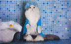 浴室で除湿機を使ったカビ対策。洗濯も乾かせて家事の時短にも
