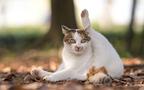 猫モフり放題! 瀬戸内海に浮かぶ猫まみれの島
