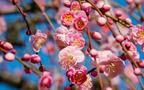 日本の季節24等分にしてみた、「二十四節気(にじゅうしせっき)」の意味って知ってる?