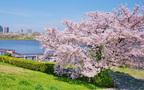 知られざる都内の桜絶景スポットで、ゆっくりお花見