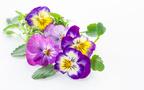 五七五七七で味わう春を詠んだうたを解説・紹介