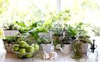 カップ野菜で、楽しいキッチン菜園! 親子で始めるかんたん野菜づくり