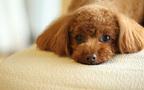 犬や猫にもつらい季節が! 夏のペットの熱中症対策