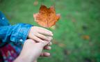 紅葉の季節を子どもと一緒に・・・紅葉と落ち葉の絵本<絵本ナビ監修>絵本をえらぶ Vol.19