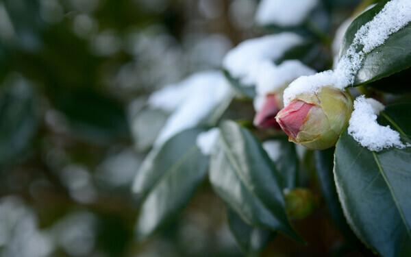 霜柱や氷を子どもと楽しもう! 四季を感じる「冬の公園」の楽しみ方