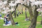 桜の季節がやってくる! 「子連れ花見」を成功させるためのコツ