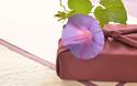 マンネリがちな帰省時の手土産 周りと差を付けられる手土産は実はこれ⁉【パパママの本音調査】  Vol.135