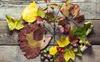 拾った木の実から虫がニョロリ⁉  親子で真っ青にならないための木の実・落ち葉の正しい保管手引き