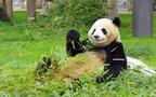 シャンシャンかわいすぎ!上野の赤ちゃんパンダに会う方法