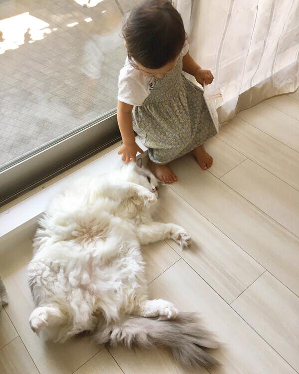 【いぬねこ うちのこ。】フガちゃん(1歳)と猫のムーム /ムームママさん