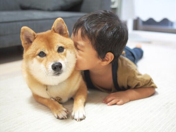 【いぬねこ うちのこ。】柴犬八朔と弟くん(3歳) /八朔ママさん