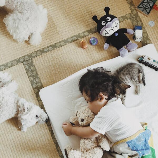 【いぬねこ うちのこ。】お餅くん(3歳)とトイプードルのぱぴこ&あいす、キジトラのあんみつ/ao*さん