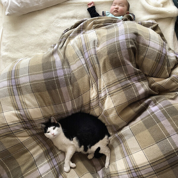 【いぬねこ うちのこ。】あーちゃん(11ヶ月)、パンチョとガバチョ/あゆみさん