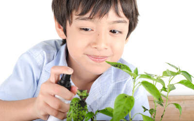 「野菜高すぎ!」冬の食卓を救うのは親子で挑戦「野菜くずで再生栽培」
