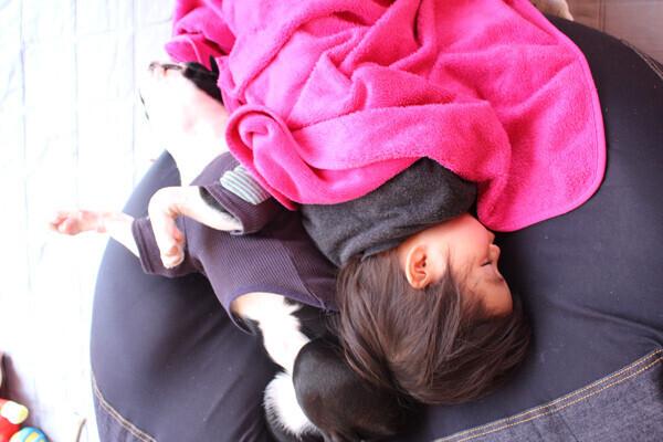 【いぬねこ うちのこ。】みつるくん(2歳)とボストンテリアの「もっちも」/まちみつもんさん