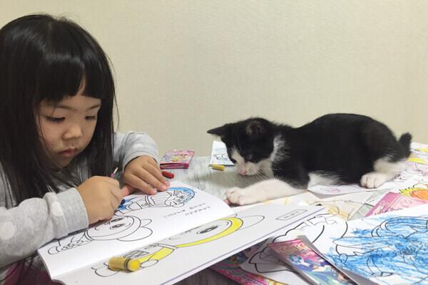【いぬねこ うちのこ。】ちびマメちゃん(6歳) と猫のマメとゴマ/korokoronyaさん