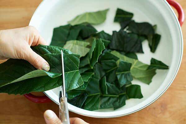 夏の子どもの皮膚トラブル 手作り「ビワの葉スプレー」で優しくケア